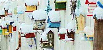 Fed by Birds in Winter